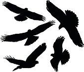 Flying Birds of Prey Silhouettes