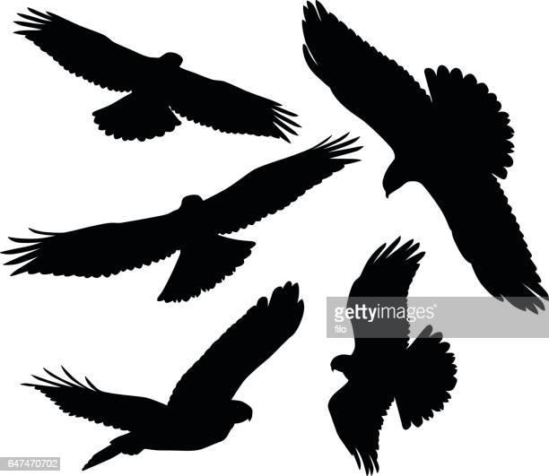 flying birds of prey silhouettes - falcon bird stock illustrations, clip art, cartoons, & icons