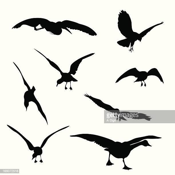 flying birds vector silhouette - webbed foot stock illustrations, clip art, cartoons, & icons