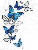 Flying butterflies morpho