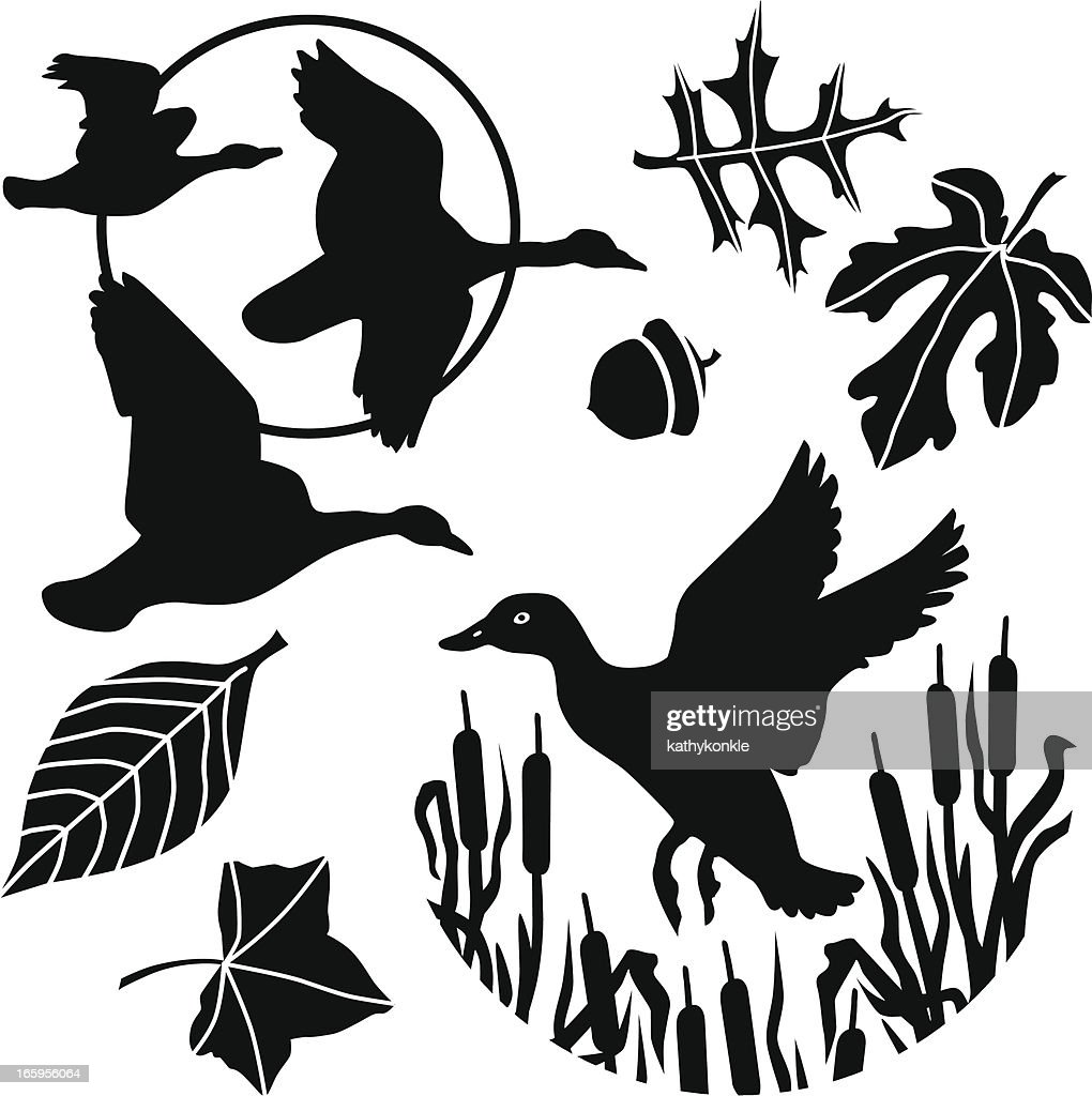 flying duck and geese : stock illustration