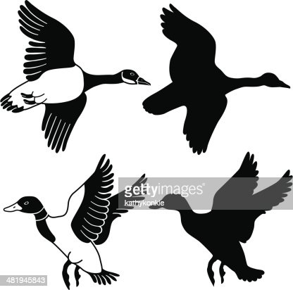 flying goose and duck vector art getty images