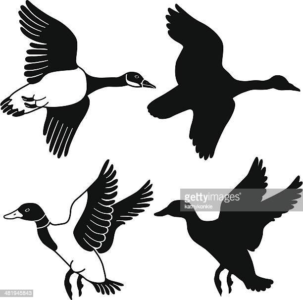 flying goose and duck - duck stock illustrations, clip art, cartoons, & icons