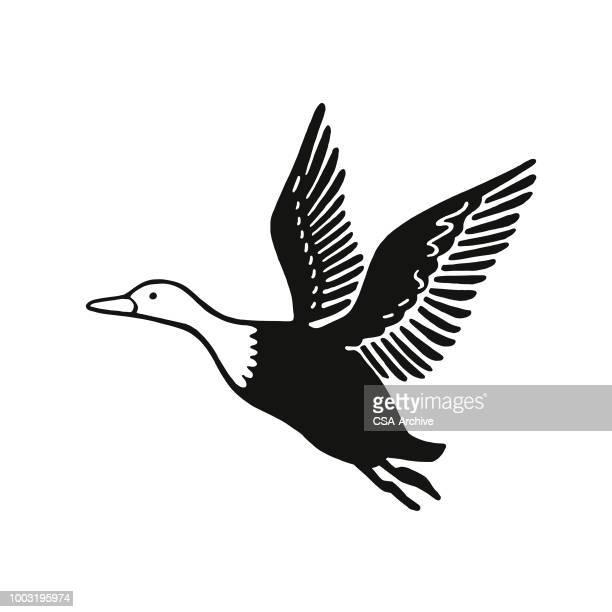 flying goose - duck stock illustrations, clip art, cartoons, & icons