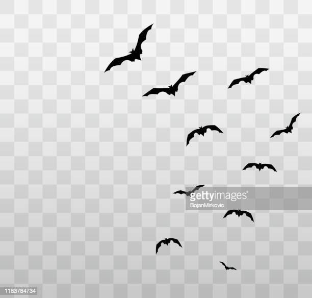 fliegende halloween fledermäuse auf transparentem hintergrund. vektor - gliedmaßen körperteile stock-grafiken, -clipart, -cartoons und -symbole