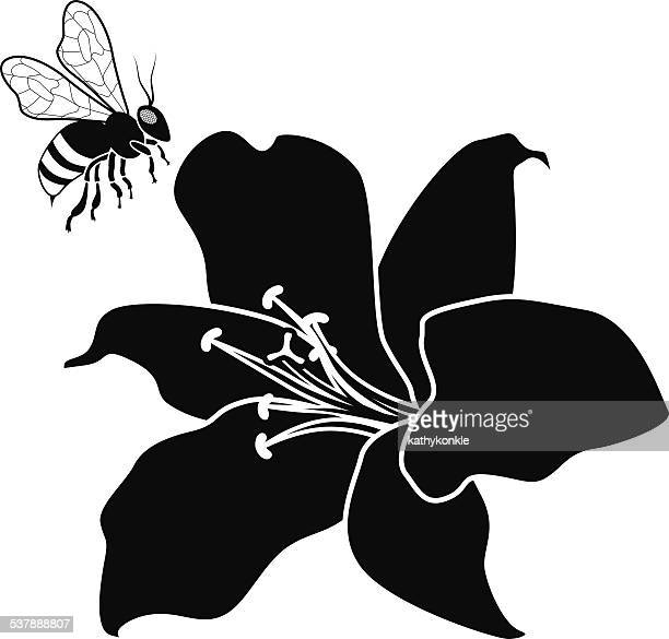 flying honey bee and lily flower in black and white