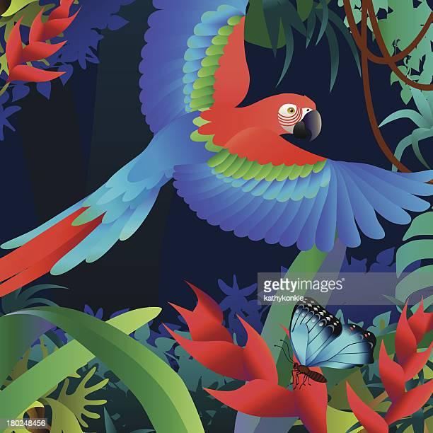 Perroquet volant et Héliconia
