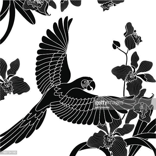 Perroquet volant et des orchidées