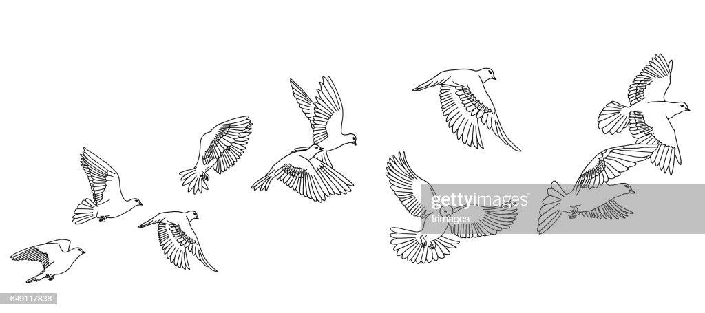 Flying pigeons banner