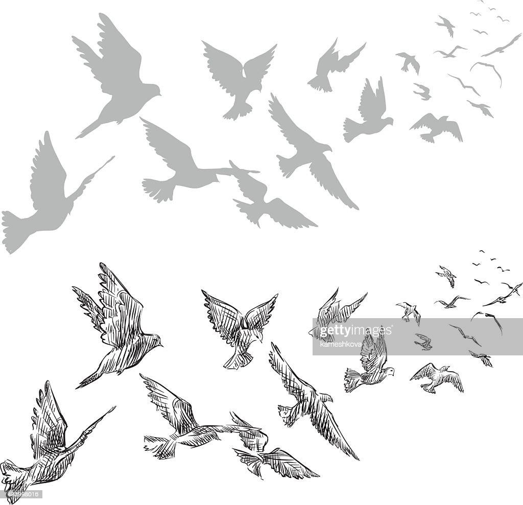 flying pigeons, hand drawn, vector illustration