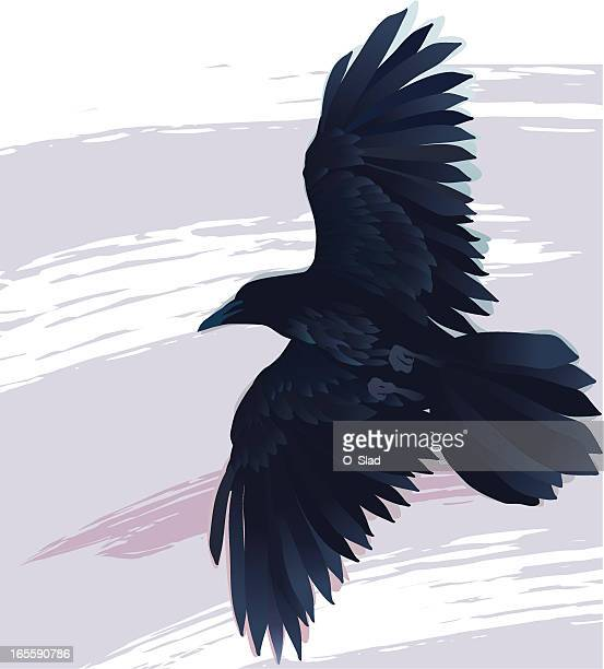 ilustraciones, imágenes clip art, dibujos animados e iconos de stock de flying raven - cuervo