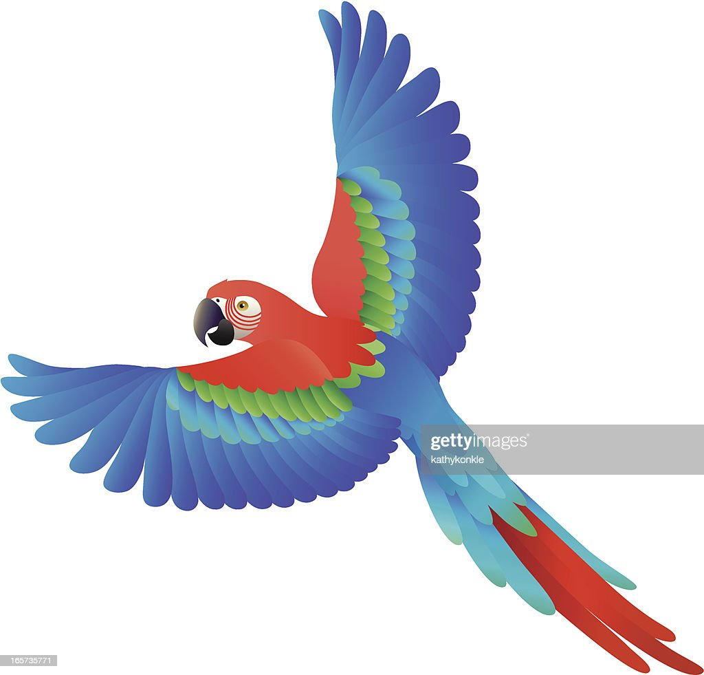Flying Scarlet Macaw stock illustration - Getty Images
