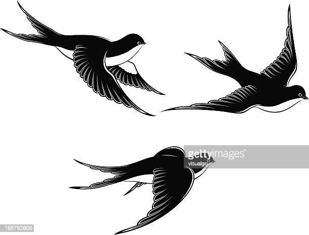illustrations, cliparts, dessins animés et icônes de volant hirondelles - hirondelle