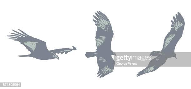Flying Turkey Vulture silhouettes