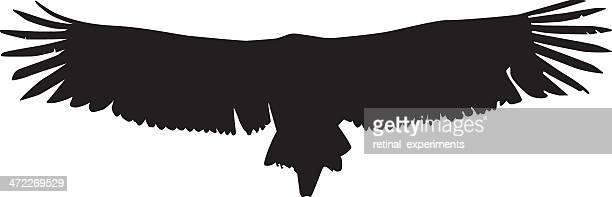 フライングハゲワシウイングのディテール - 内陸部の岩柱点のイラスト素材/クリップアート素材/マンガ素材/アイコン素材