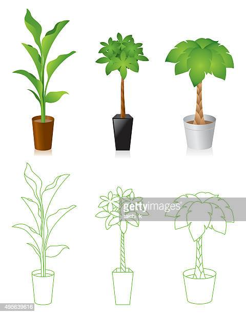 World S Best Indoor Plant Stock Illustrations Getty Images