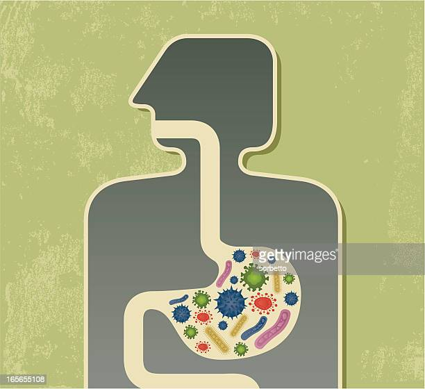 food poisoning graphic with multicolored bacteria in stomach - intestine stock illustrations