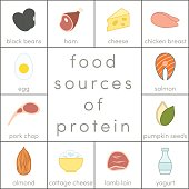 Food sources of protein