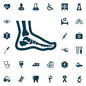 Foot anatomy. Single flat icon, medical set on white background. Vector illustration.