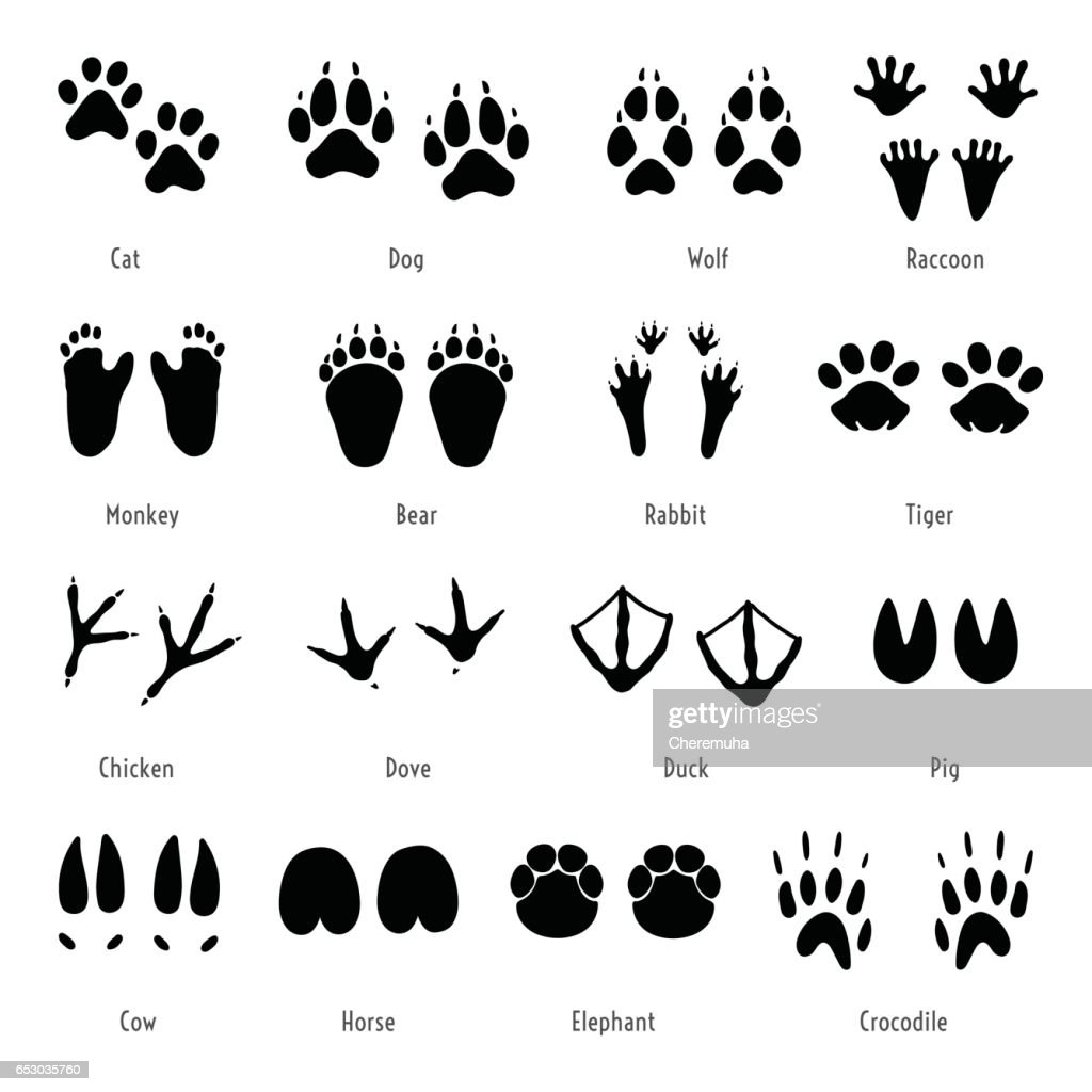 Foot trail vector. Animal footprint set. Silhouettes of tracks