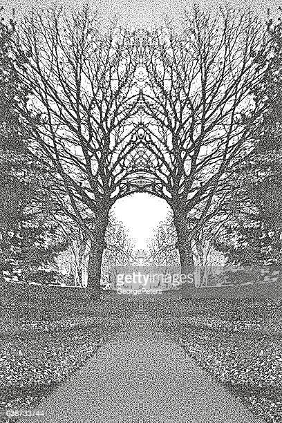 Footpath In A Metro Park with Arched Trees
