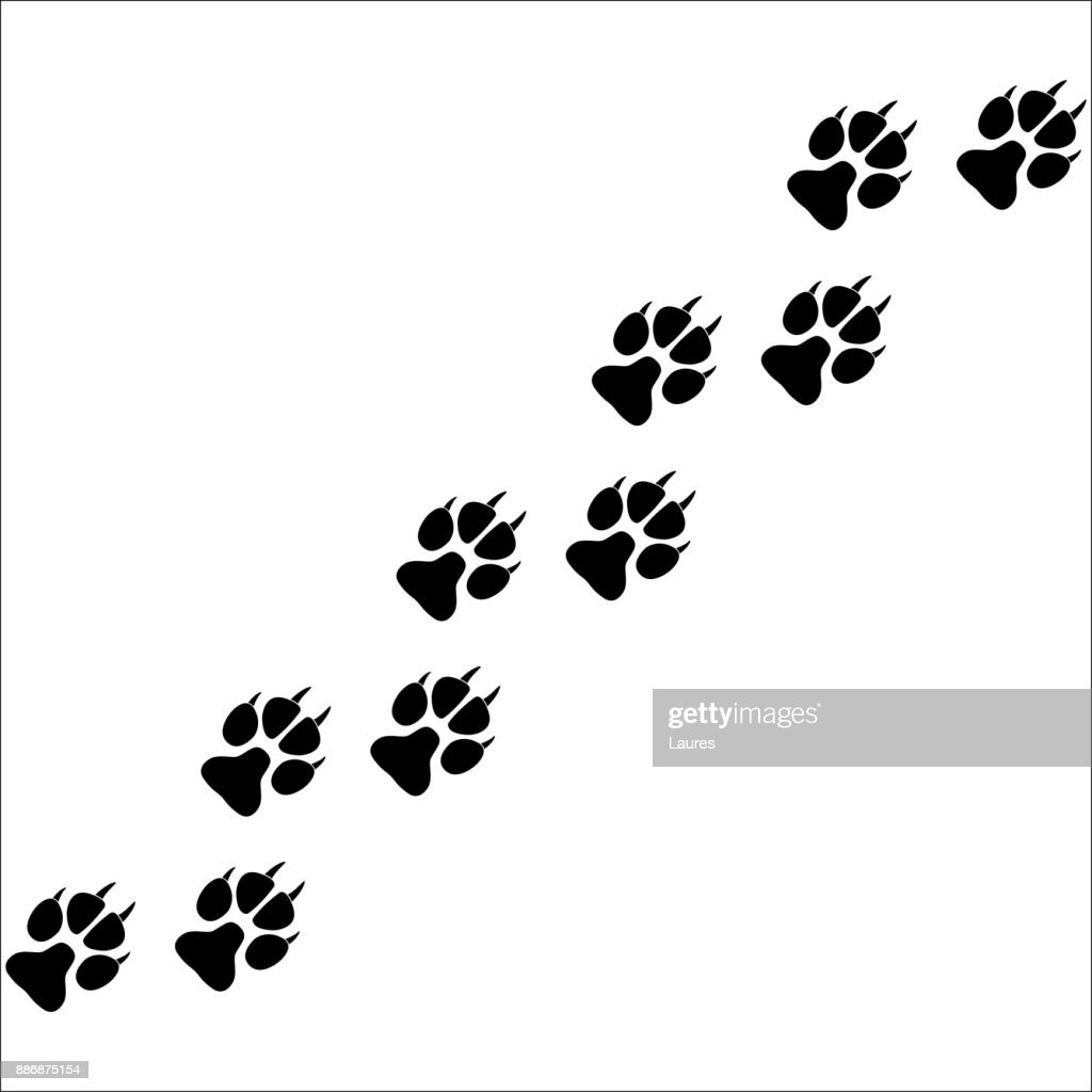 Footprints of paws of an animal