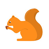 Forest animal a little squirrel with a tail and in pads with a nutlet an acorn the character the cartoon. In flat style a vector.