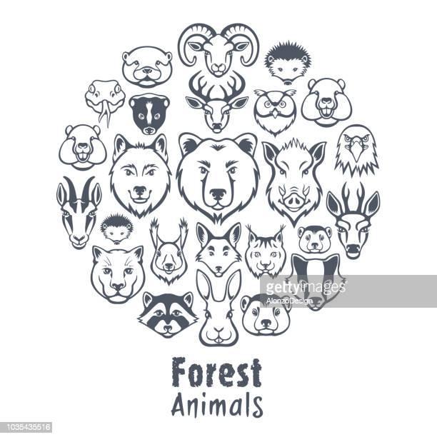 ilustraciones, imágenes clip art, dibujos animados e iconos de stock de collage de animales de bosque - fauna silvestre
