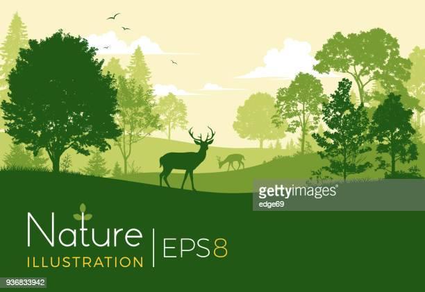 wald-hintergrund mit hirsch - animals in the wild stock-grafiken, -clipart, -cartoons und -symbole