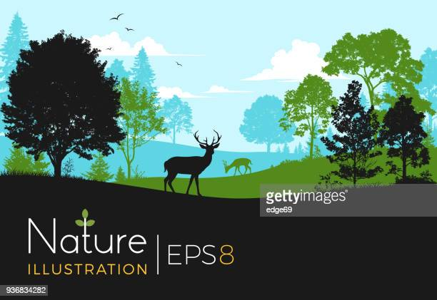 forest background with deer - natural parkland stock illustrations, clip art, cartoons, & icons