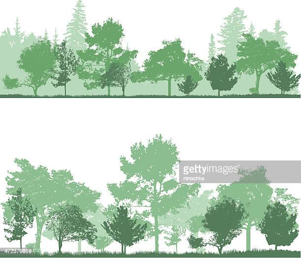 forest backgrounds in shades of green - coniferous tree stock illustrations, clip art, cartoons, & icons