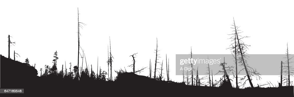 Forest Fire Natural Disaster