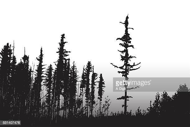 ilustraciones, imágenes clip art, dibujos animados e iconos de stock de incendio forestal de supervivencia de los árboles - incendio forestal