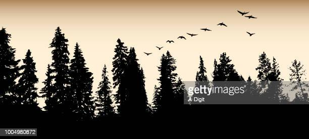 forest goose migration flight - sepia toned stock illustrations