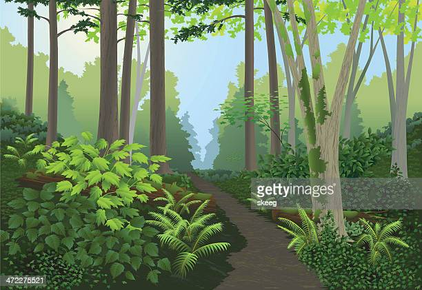 forest landscape - deciduous tree stock illustrations, clip art, cartoons, & icons
