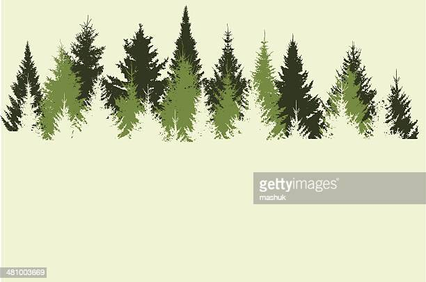 forest - evergreen stock illustrations