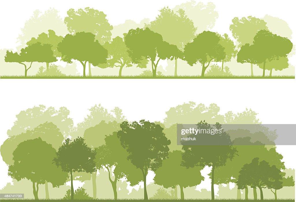 forest : stock illustration