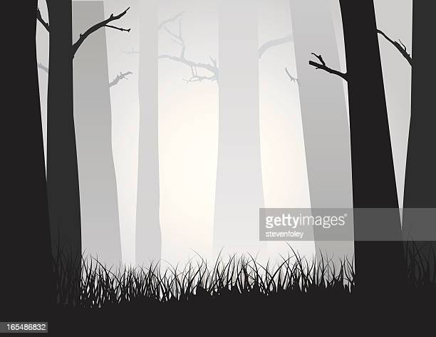 Forest Woods in Fog