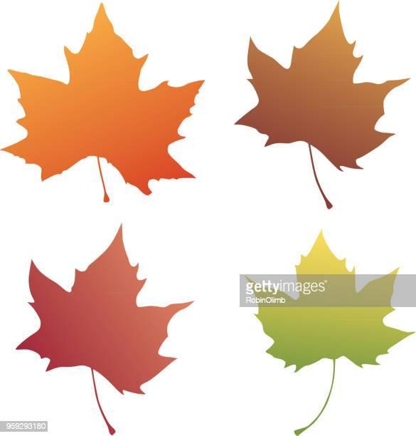 stockillustraties, clipart, cartoons en iconen met vier autumn leaves - esdoornblad