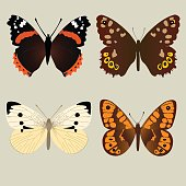 Four different beautifully butterflies