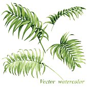Four green vector watercolored palm leaves