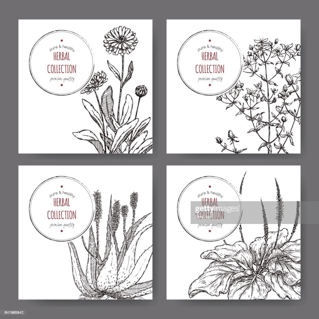 four herbal labels with calendula, saint john wort, aloe, plantago