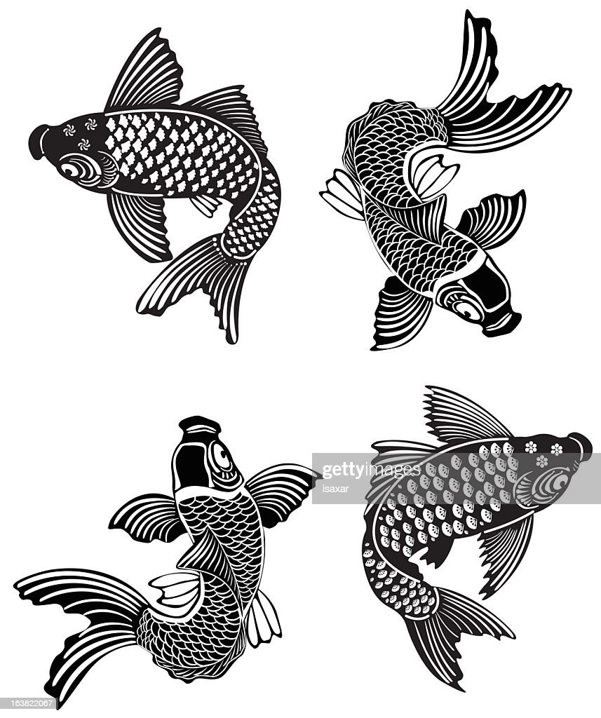 Four koi fish swimming in different directions