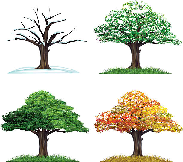 Four Season Tree Wall Art