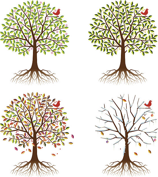 Four Seasons In One Tree. Wall Art