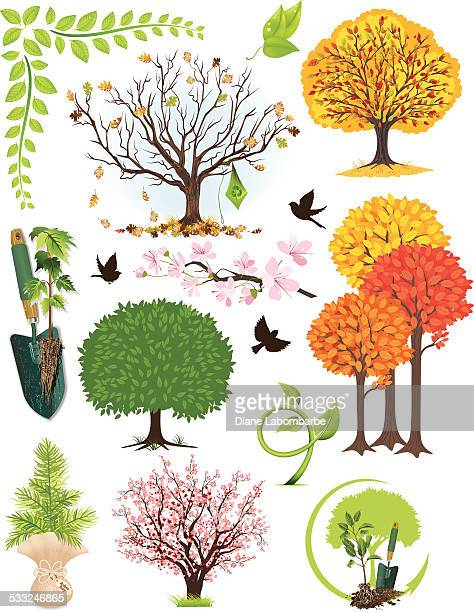 Four Seasons Tree and Leaf Collection