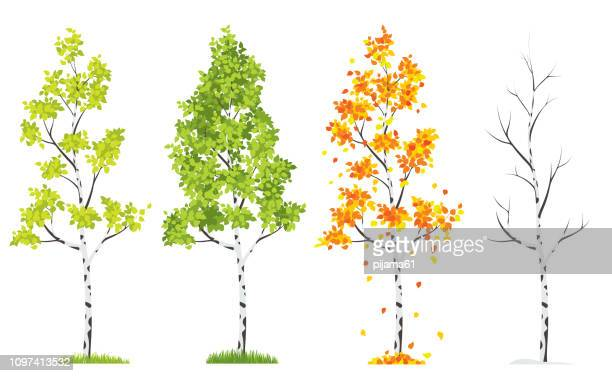 four seasons tree - deciduous tree stock illustrations, clip art, cartoons, & icons