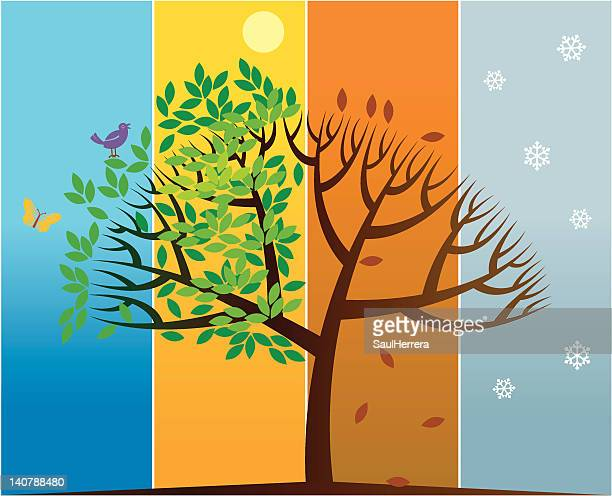 four seasons tree - water cycle stock illustrations, clip art, cartoons, & icons