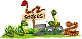 Four snakes in the zoo