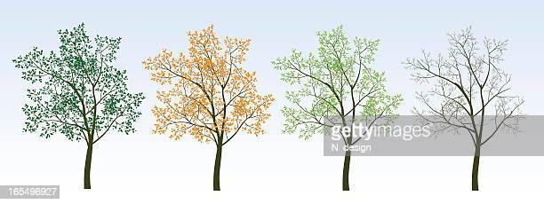 illustrations, cliparts, dessins animés et icônes de quatre arbres - les 4 saisons